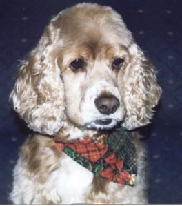 My_Sadie_Dog_-_8_years_old 1