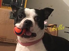 Bella Bartlett IMG_0715.JPG