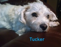 Tucker Boothe with name (2)